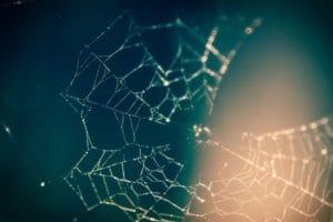 Neural Network Titelbild - Spinnennetz