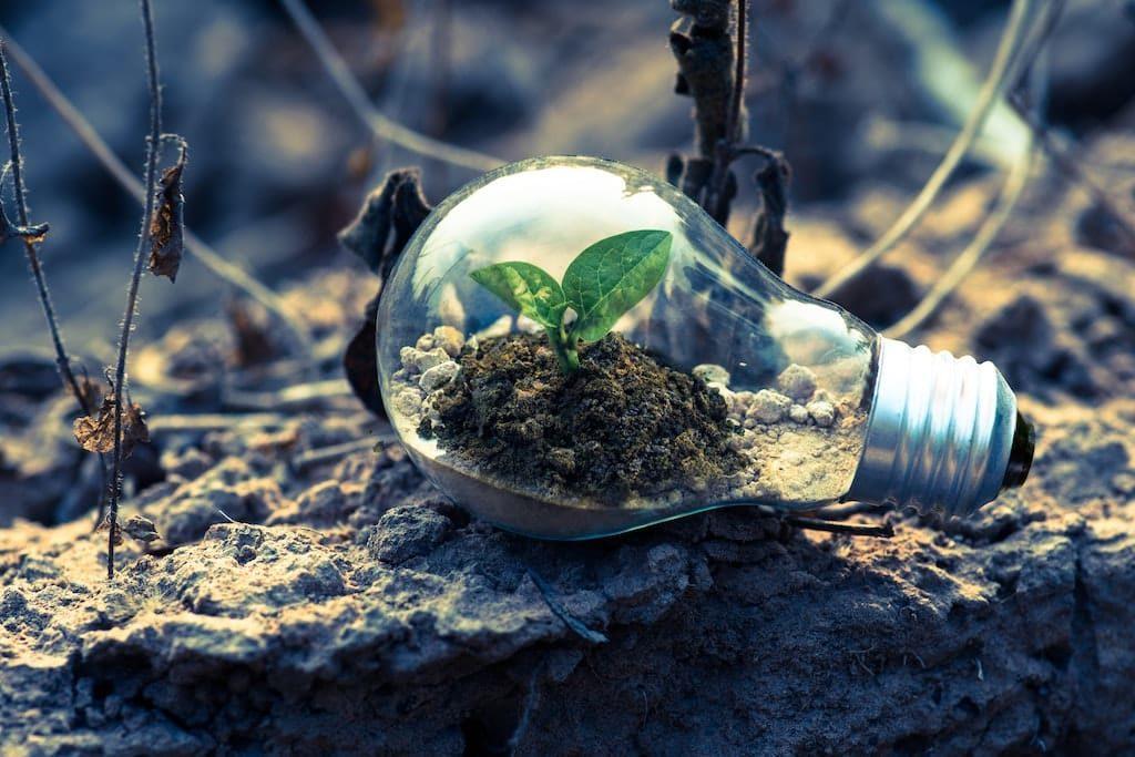 Titlebild Bodenfeuchtesensor - Pflanze in Glühbirne auf Naturboden